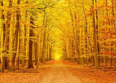 Pathway in der Herbst-Park