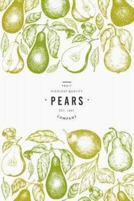 Poster Pear design template. Hand drawn vector garden fruit illustration. Engraved style garden fruit frame. Retro botanical banner.