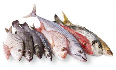 Poster pescato Mediterraneo in fondo bianco