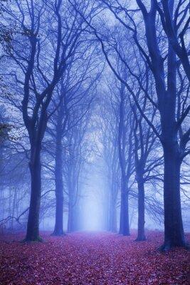Poster Pfad in einem dunklen und nebligen Wald in den Niederlanden