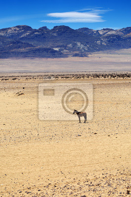 Pferd in der Sukkulenten Karoo-Wüste, Namibia