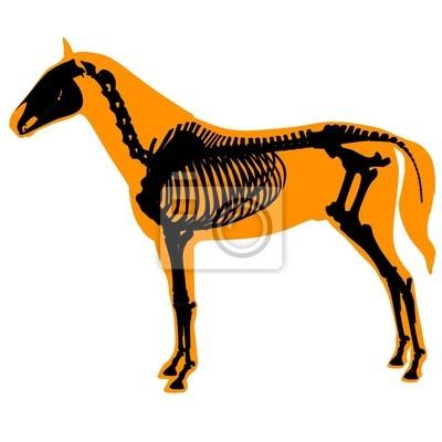 Pferd skelett und körper wandposter • poster Rippe, Knochen ...