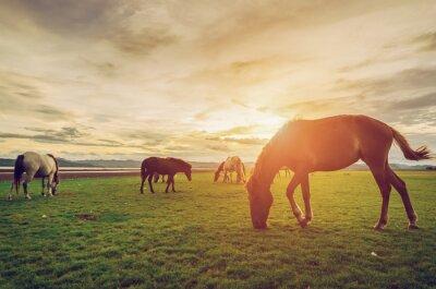 Poster Pferde auf dem Feld Gras mit Sonnenuntergang Vintage und Retro-Stil