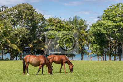Pferde in der Nähe des Strandes in Nord-Costa Rica. Costa Rica