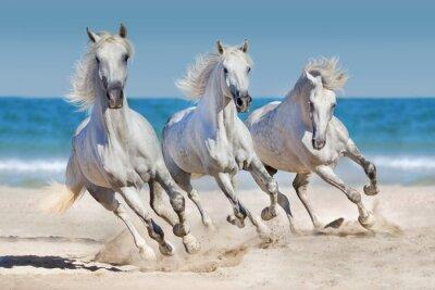Poster Pferde laufen an der Küste entlang