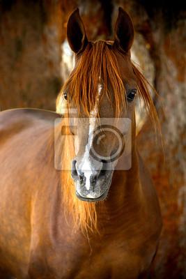 Pferdeporträt auf einem Bauernhof im Sommer