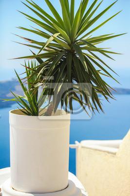 Pflanze in einem Blumentopf gegen das Meer in Santorini