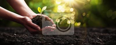 Poster Pflanze in Händen. Ökologie-Konzept. Natur Hintergrund