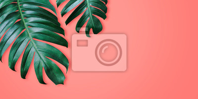 Poster Philodendron tropical leaves on coral color background minimal summer