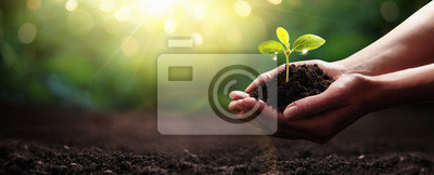Poster Plant in Hands. Ecology concept. Nature Background