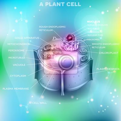 Plant zellstruktur, querschnitt der zelle detaillierte anatomie ...