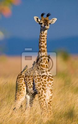 Portrait of a baby giraffe. Kenya. Tanzania. East Africa.