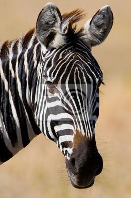 Portrait of a zebra. Tanzania.