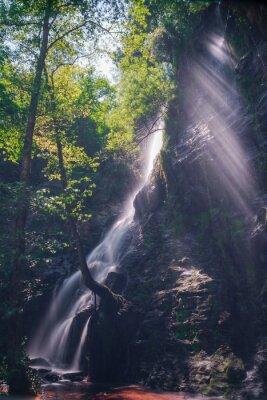 Poster Rayos de Sol ein través de las hojas de bosque en la cascada de Hortas, Galizien