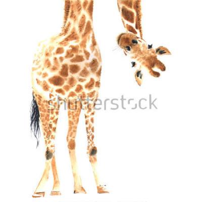 Poster Realistische Giraffe in Aquarell gemacht. Nahansicht. Hand gezeichnete Abbildung