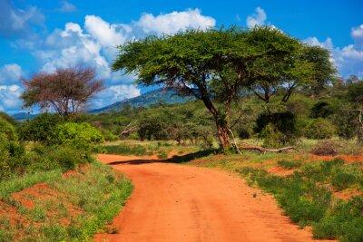 Red Boden Straße, Busch mit Savanne. Tsavo West, Kenia, Afrika