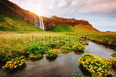 Poster Reizende Ansicht des blühenden grünen Feldes im Sonnenlicht. Dramatische und wunderschöne Szene. Beliebte Touristenattraktion. Standortplatz berühmter Seljalandsfoss-Wasserfall, Island, Europa. Entdec