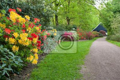 Rhododendren in einem Park