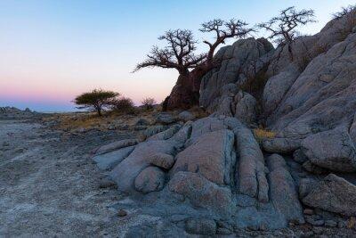 Rocks and baobab tree at twilight