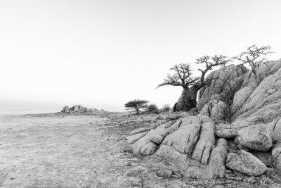 Rocks and baobab tree on Kubu Island in black-and-white