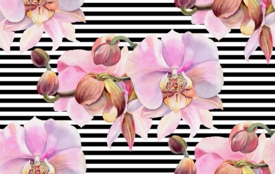 Poster Rosa Orchideen
