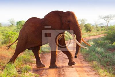 Rote Elefanten auf afrikanische Savanne in Kenia