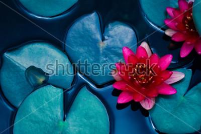 Poster rote Lotus-Seerose, die auf Wasseroberfläche und dunkelblauen Blättern getont, Reinheitsnaturhintergrund, Wasserpflanze, Symbol des Buddhismus blüht.
