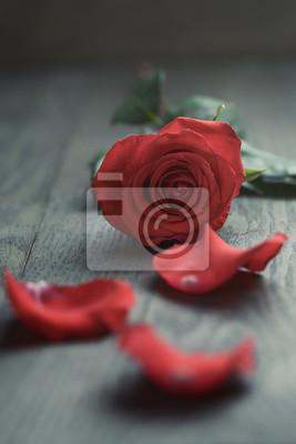 Poster Rote Rose mit Blütenblättern auf Holztisch