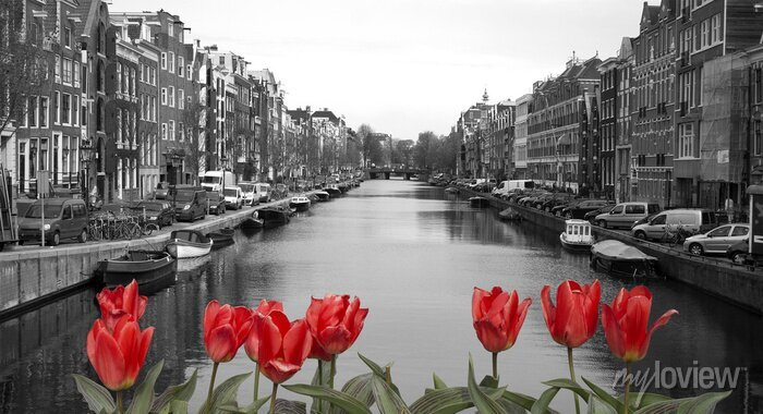 Poster rote Tulpen in Amsterdam