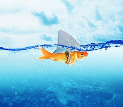 Poster Roter Fisch als Hai