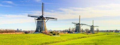 Poster Rural landscape - view of green meadow on background of the mills on a sunny day, the Netherlands