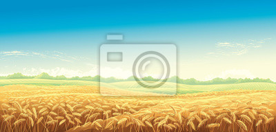 Poster Rural landscape with wheat fields and background. Vector illustration.