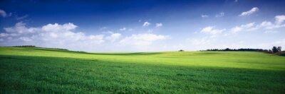 Poster Russland Sommer Landschaft - grüne fileds, den blauen Himmel und weißen c
