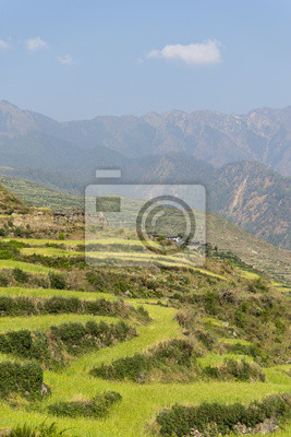 Saftig grüne Terrassenfelder Berg