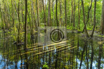 Saisonale Hochwasser im grünen Wald reflektiert