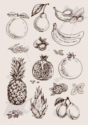 Poster Sammlung von Handzeichnung isoliert Früchte