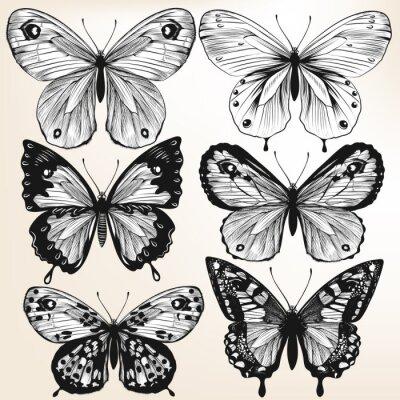 Poster Sammlung von Vektor-Hand gezeichnete ausführliche Schmetterlinge für Design