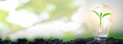 Poster Sapling glowing in light bulb in soil with natural bokeh background, idea or energy and safe environment concept