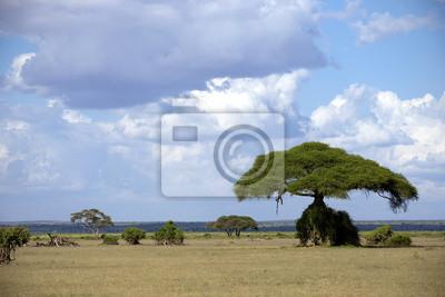 Savannah in Kenia