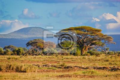 Savannenlandschaft in Afrika, Amboseli, Kenia