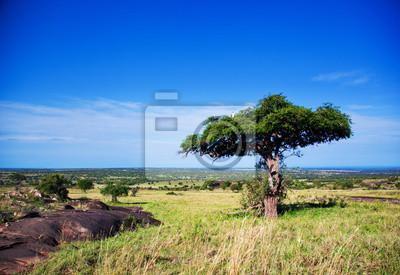 Savannenlandschaft in Afrika, Serengeti, Tansania