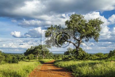 Savannenlandschaft in Nationalpark Kruger, Südafrika