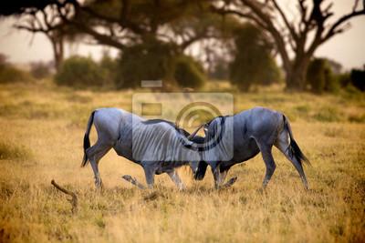 Schlacht auf den Ebenen des Amboseli