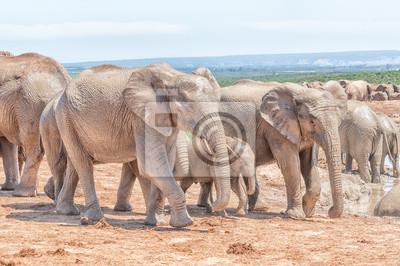 Schlamm bedeckt afrikanischen Elefanten zu Fuß