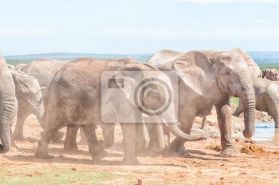 Schlamm bedeckt afrikanischen Elefanten zu Fuß in Staub