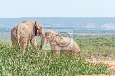 Schlamm bedeckt Elefanten Ringen