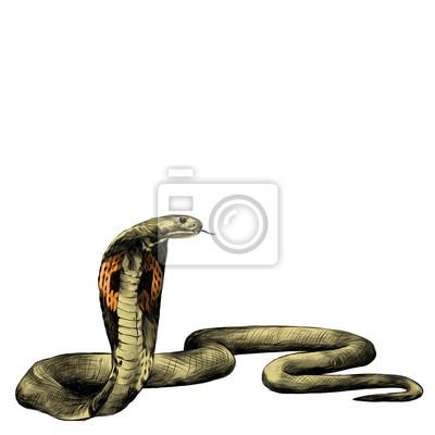Schlange brille cobra kriechen, skizze vektorgrafiken farbbild ...