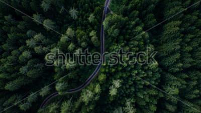 Poster Schmale Straße zwischen Wald, Blick auf die Drohne