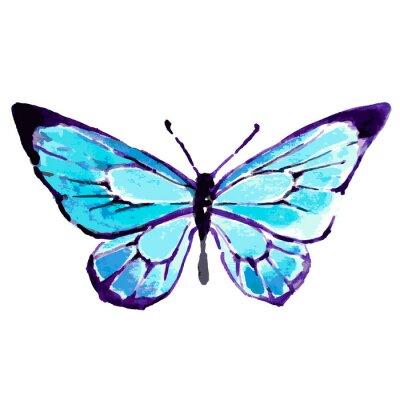 Poster Schmetterling, Aquarellentwurf