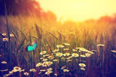 Poster Schmetterling fliegt Frühjahr Wiese Gänseblümchen